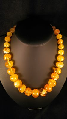 Vintage  100% Natural egg yolk colour Baltic Amber necklace,  74 grams