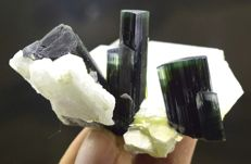 Beautiful Terminated And Undamaged Tourmaline Crystals With Cleavelandite And Mica - 51*40*27 mm - 40gr