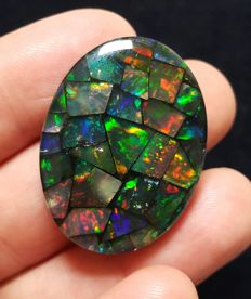 Triplet Mosaic Mexican  Fire Opal - 31 x 23 x6.5 mm - 46.86ct.