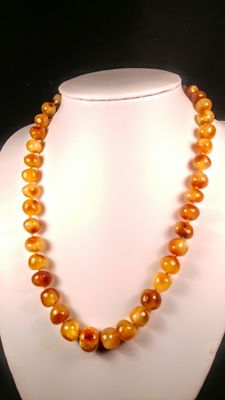 Vintage Egg yolk colour Baltic Amber necklace,  22 grams