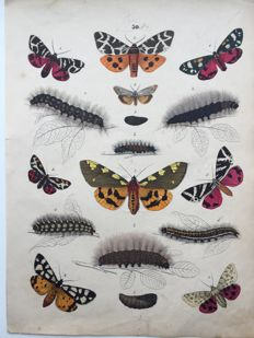 7 coloured engravings of butterflies and moths, 1860