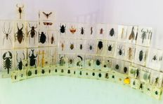 Interesting collection of insects in resin blocks - 110 x 46 mm, 70 x 40 mm and 40 x 25 mm (73)