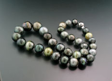 Lively multi-coloured Tahitian pearl necklace, 11.0 to 14.9 mm, 585 white gold ---- no reserve price! ---