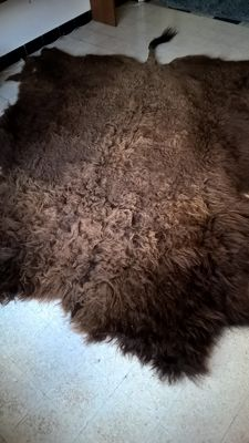 Taxidermy - Large North American Buffalo hide - Bison - 260 x 220 cm