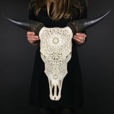 Finely carved Balinese Cow skull - Bos taurus sp - 47 x 62cm