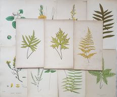 11 botanical prints by an unknown artist - Various plants - 19th century