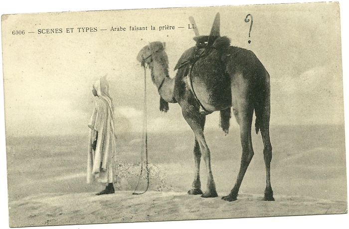 North Africa, 70 old postcards very lively of local daily