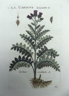 2 x Richer de Bellaval 1564-1632 - Botanical engraving - Caeduus Aster True Thistles [ Asteraceae ]  - 1598 [1796]