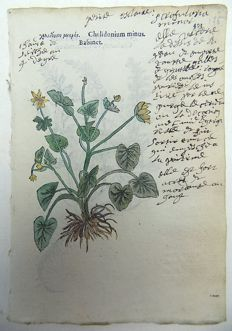 2 botanical prints by Leonhard Fuchs [1501 - 1566] - Greater Celandine [ Chelidonium ] ; Veronica Chamaedrys [ Trissago ] - With extensive manuscript descriptions - 1549