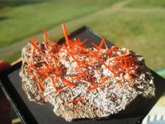 Red Crocoite crystals on matrix with Gibbsite - 7 x 5 cm - 132 g
