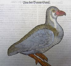 One leaf with a large sized ornithological wood block - Conrad Gesner (1516-1565) - Tree Goose - 1669