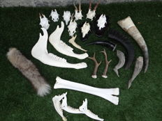Taxidermy - large lot of miscellaneous items - (30)