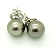 18 kt - white gold - women's - earrings - Tahiti pearls - diameter 12 mm