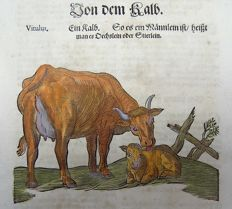 One leaf with a large sized wood block - Conrad Gesner (1516-1565) - Cow with Calf - 1669