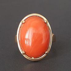 18 kt - Oval yellow gold ring with one natural coral - Size: 17.5 mm 15/55 (EU)