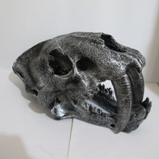 Full-sized Sabre-toothed Tiger replica skull - with metallic finish - 35 x 20 x 18.5cm - 2kg