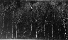 Harry Callahan (1912-1999) - New Hampshire, 1961