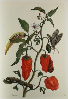 Maria Sibylla Merian - Insects of Surinam - 2008