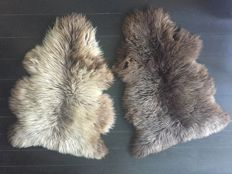 Pair of  New Zealand Sheep Skins - Beige brown and Chocolate brown - Ovidae sp. - 110 x 86cm  (2)