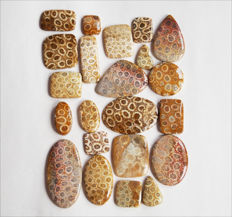 Fossil Coral lot 607cts - 22 pcs