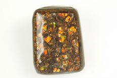 Big Natural Ammolite cabochon with millions of flashes - 2,9 x 2,2 x 1,1 cm - 14 gr - 70 ct