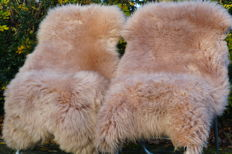 Fine pair of beige-coloured Sheep Skins - Ovis aries - 120 x 70 cm (2)