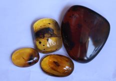 Burma amber with inclusions and a large beetle (15 - 35 mm) 4 pieces