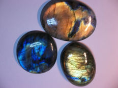 Three Labradorites // Multicolour (Gold to bronze and blue) // 65.14 g = 242.0 cts Total