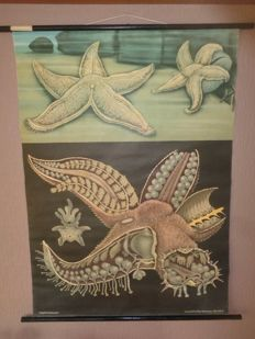 "Very nice original old school poster of Jung Koch, Quentell ""Starfish"""