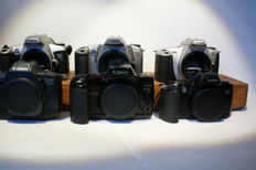 6 bodies Canon single-lens reflex cameras: the EOS 500 N, the EOS 3000 N, the EOS 300, the EOS 600, the EOS 10 and finally the EOS 500, various dates of production