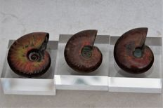 3 Pearl - opal ammonites - superb condition - 42 x 35 cm 39 x 32 cm and  37 x 32 mm