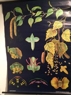 Old Botanical school poster Biology Jung Koch Quentell Birch