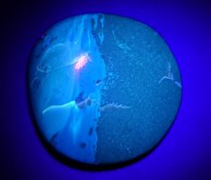 Fluorescent blue Amber from Sumatra - 61 x 59 x 24 mm - 51 g