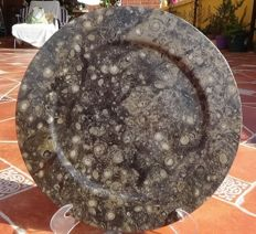 Large polished fossil dish with more than 100 ammonites - 110 cm - 1.630 kg