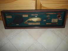 The beautiful game of fly fishing - Very beautiful large vintage display cabinet with fly fishing attributes - very good condition