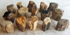 15 Trunks of petrified wood - 3 kg - approx. 50 mm (15)