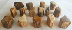 15 trunks of petrified wood - 3 kg - 50 mm