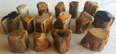 Trunks of petrified wood - approx. 3 kg - approx. 50 mm (15)