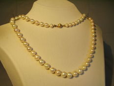 High quality cultured pearl necklace 185 ct in progression on a 14 karat gold clasp
