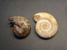 ammonite set - 86 / 73 mm 299 g (2)