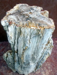 Petrified wood - 38 X 20 X 17 - 20.4 kg