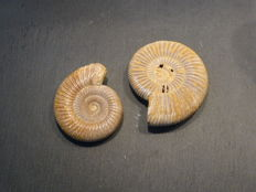 Perisphinctid ammonite set - 86 / 71 mm 232 g (2)