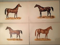 20 prints - The book of the horse - England - 1870