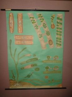"Nice old school poster of Jung Koch Quentell ""Algae"""