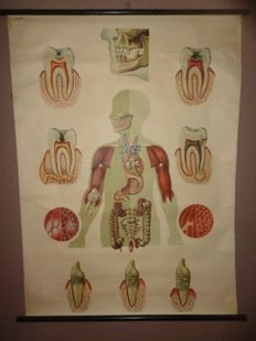 Old school poster of the teeth
