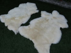 Fine pair of natural Sheepskins - Ovis aries - 80 x 110cm  (2)