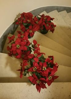 4 gorgeous synthetic faux velvet Poinsettias