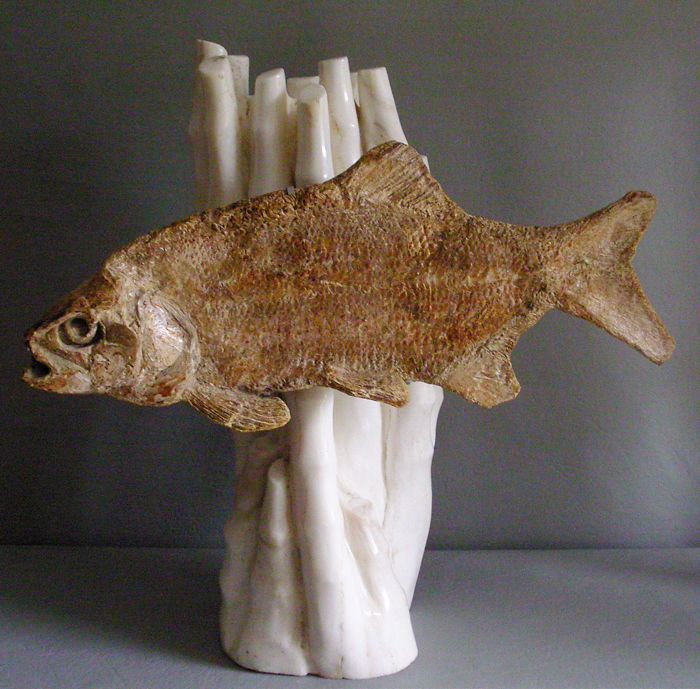 Fantastic prehistoric bony fish - in front of white travertine - 58 x 24 x 59 cm