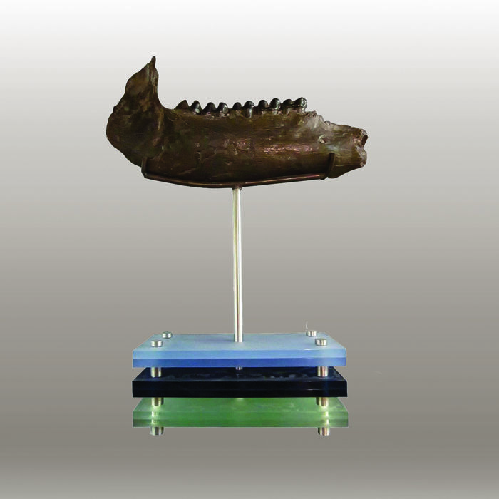 Bit of bite - 23 x 7 x 33 cm - lower jaw from an ancient tapir - combined with blue acrylic - and stainless steel