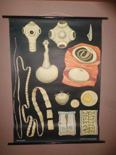 "Nice school poster of Jung Koch Quentell ""Tapeworm"""
